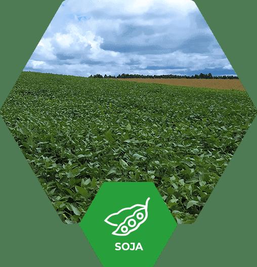 Cultura de Soja no Brasil - Fertimacro - Fertilizantes