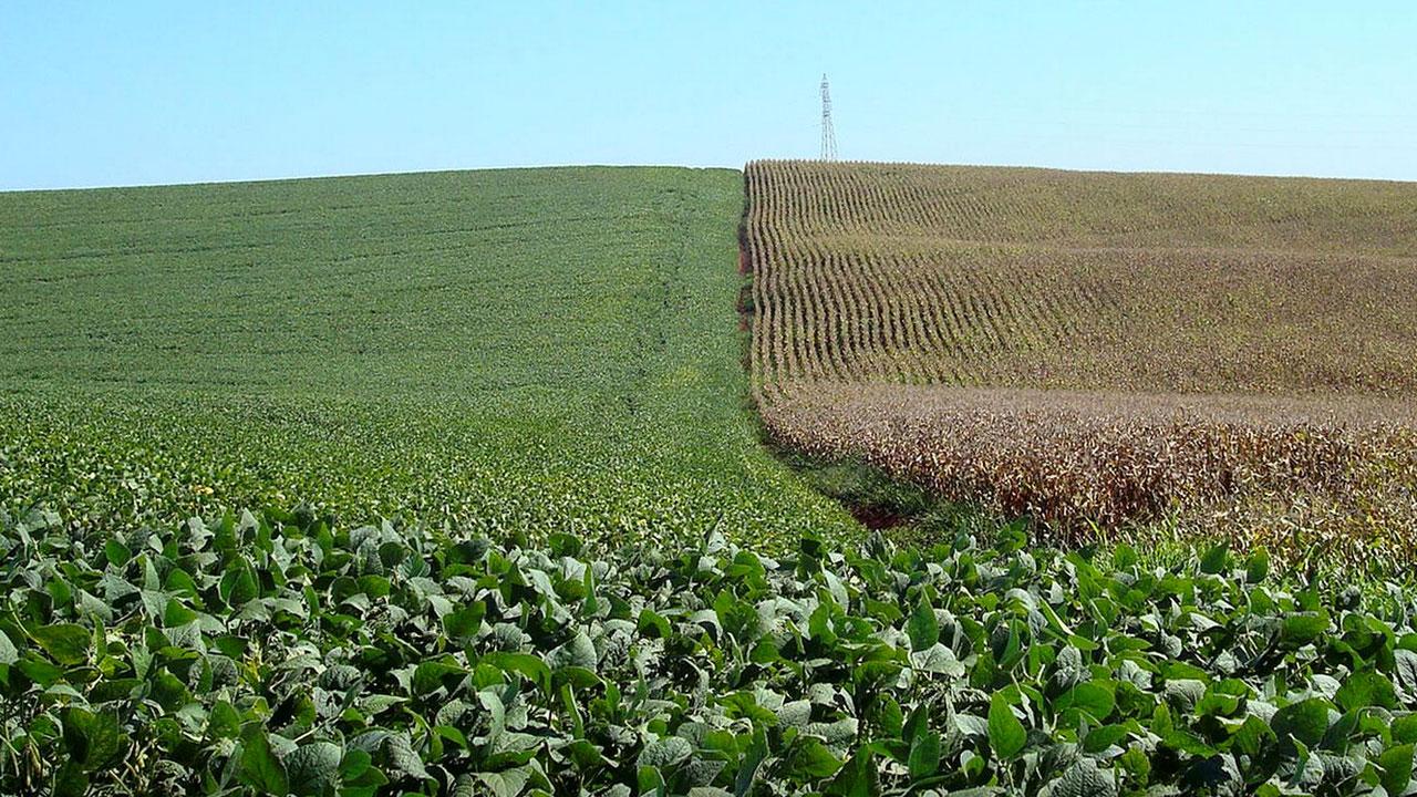 Avaliação da eficiência agronômica de óxidos de Ca e Mg em diferentes doses na cultura da soja na região de Passo Fundo, Rio Grande do Sul.