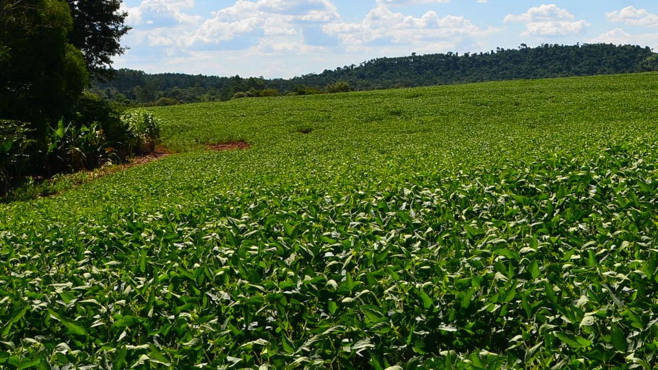 Avaliação do rendimento de grãos no uso de produtos à base de óxido de Ca e Mg aplicados em linha de plantio e em superfície na cultura da soja