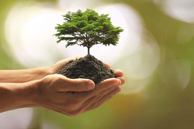 21 de setembro – Dia da Árvore: a importância dos programas de Reflorestamento