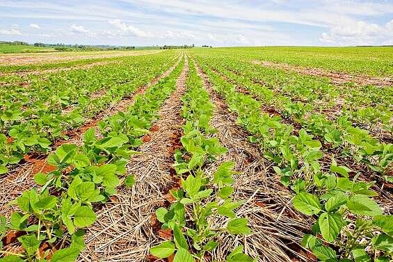 Avaliação da aplicação de Fertimacro Super 100 na produção de soja em solo de textura muito argilosa no Noroeste do Paraná