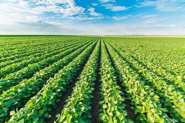Avaliação da aplicação Fertimacro Super 100 e Fertimacro FX 170 na produção de soja em solo de textura muito argilosa no Noroeste do Paraná