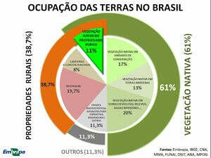 Programa de reflorestamento - Produtores Brasil